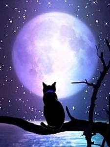 満月と黒猫